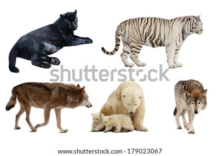 Set of Carnivora mammal. Isolated over white background with shade - stock photo