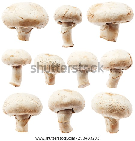 Set of champignon mushroom isolated on white background - stock photo