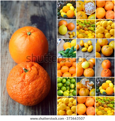Set of citrus fruits from tangerines, kumquats, oranges and lemons - stock photo