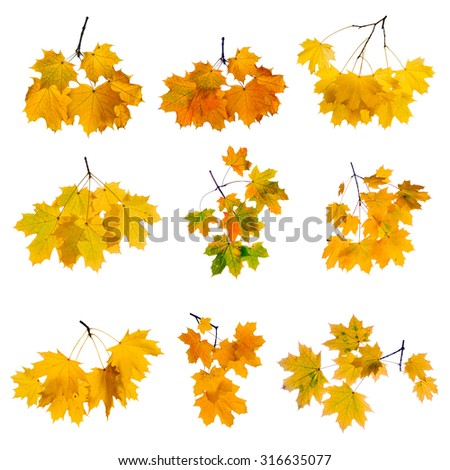 Set of colorful autumn branch isolated on white background. - stock photo