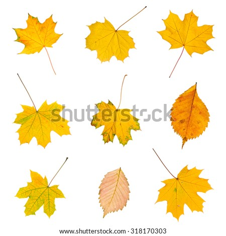 Set of colorful autumn leaves isolated on white - stock photo