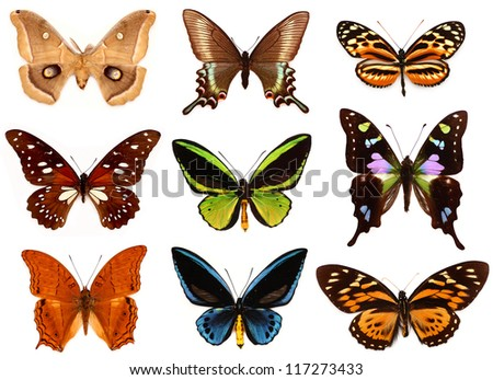 Set of colorfully butterflies on white background - stock photo