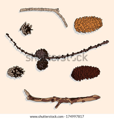 set of different cones and branches, vintage illustration - stock photo