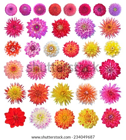Set of different dahlias isolated on white background - stock photo