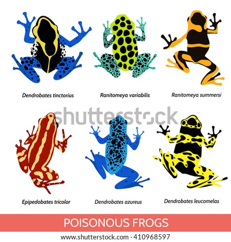 Set of different poisonous frogs. Raster  illustration of poisonous frogs on a white background.Set of isolated frogs. Frog clip-art. Frog water and frog tree. Dyeing dart frog. Blue poison dart frog. - stock photo