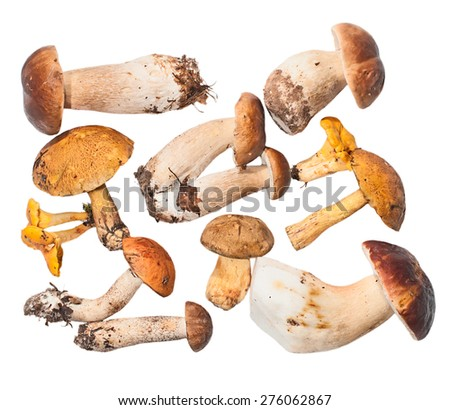 Set of edible mushrooms: white fungus, flywheel, boletus, orange-cap boletus, chanterelles - stock photo