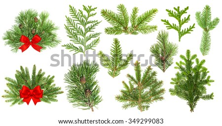Set of evergreen coniferous tree branches isolated on white background. Christmas decoration with red ribbon bow - stock photo