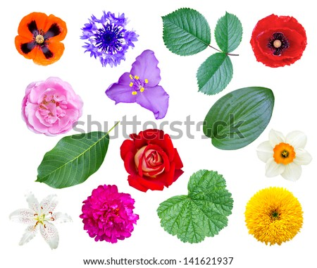 set of flowers and leaves isolated on white background - stock photo