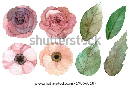 Set of flowers and leaves traditional drawing and painting by water-color on white background - stock photo
