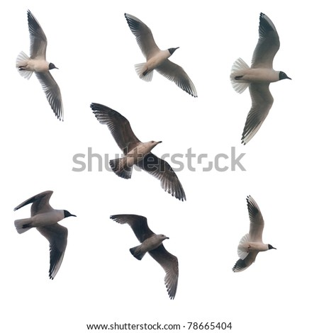 set of flying birds isolated on white background - stock photo