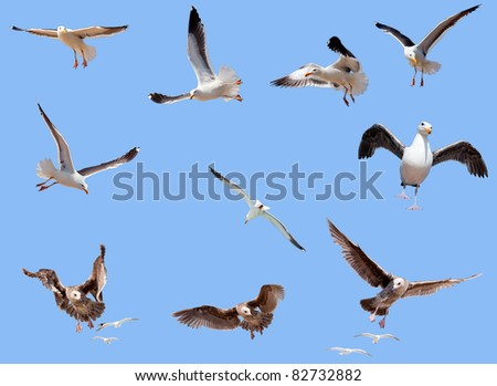 Set of flying seagulls on cloudy sky background - stock photo
