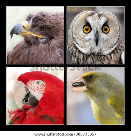 Set of four different beautiful birds - Golden Eagle, Boreal Owl, Scarlet Macaw parrot bird and Greenfinch - stock photo