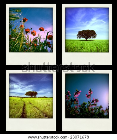 Set of four instant Nature and Spring Photos - All photos are owned by me - stock photo