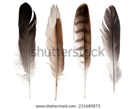 set of four straight feathers isolated on white background - stock photo