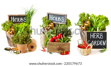 Set of fresh kitchen garden vegetables and herbs with gardening tools. - stock photo