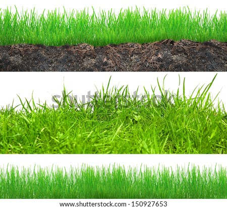 Set of grass in soil isolated on white - stock photo