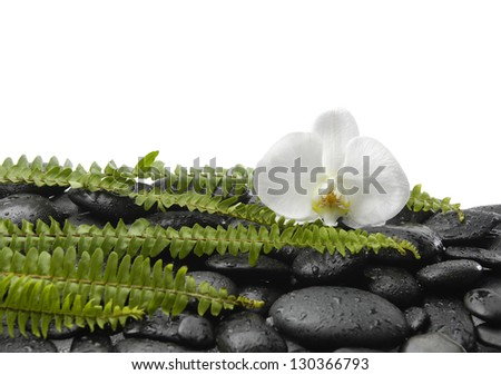 Set of green fern with white orchid on wet pebbles - stock photo