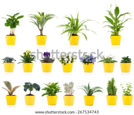 set of green house plant, isolated on white background - stock photo