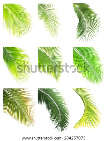 Set of Green palm or coconut leaf isolated on white background - stock photo