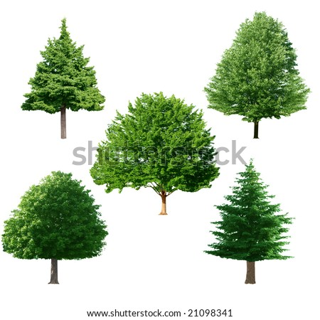 set of green tree isolated on white background - stock photo