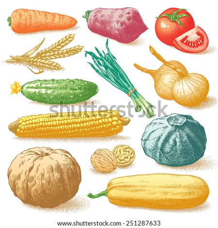 Set of hand drawn vegetables, fruits and plants on white background - stock photo