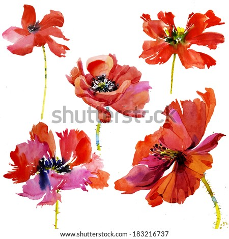Set of 5 hand painted watercolor poppy flowers - stock photo