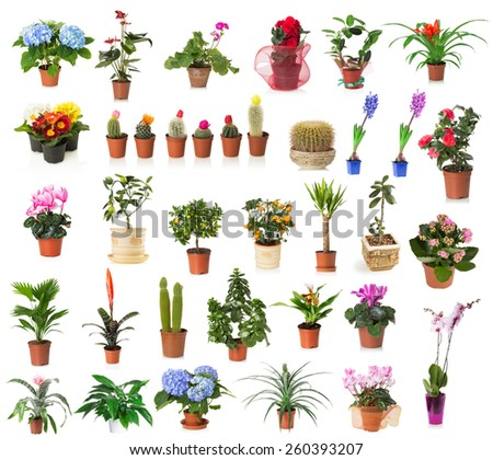 set of houseplants isolated on the white background - stock photo