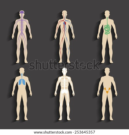 Set of human organs and systems of the body vitality - stock photo