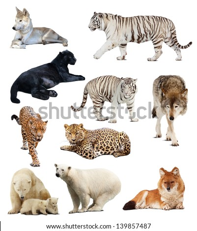Set of images of carnivores. Isolated over white background with shade - stock photo