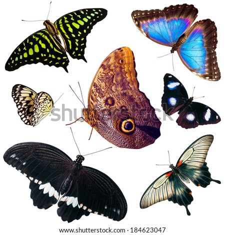 Set of isolated different types and colors butterflies - stock photo