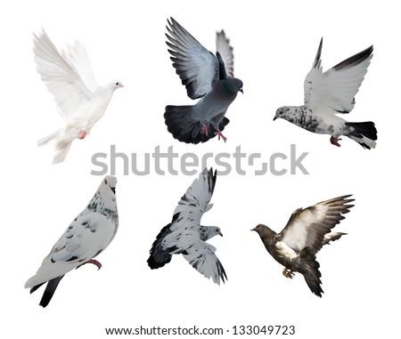 set of isolated on white six doves - stock photo
