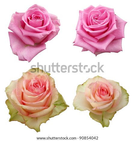 set of isolated pink roses - stock photo