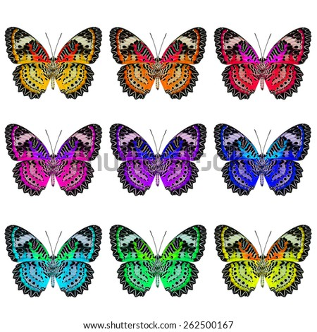 Set of Leopard Lacewing Butterfly lower wing portions in colorful and fancy color profile - stock photo