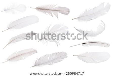 set of light grey feathers isolated on white background - stock photo
