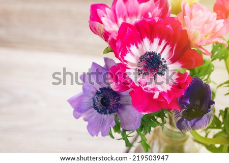 set of mauve and blue  anemone  flowers  in vase   on table with copy space  - stock photo