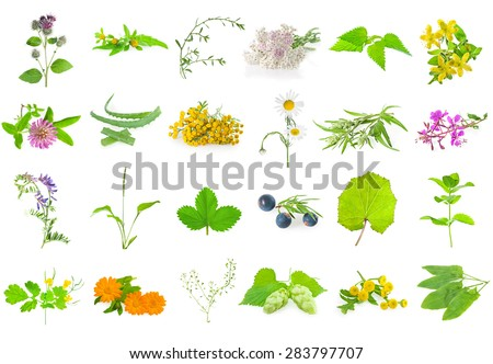 Set of medicinal herbs , aromatic herbs and flowers, isolated on white. - stock photo