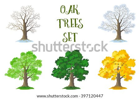 Set of Oak Trees and Grass, Seasons. Leafless with Twigs and Branches, Snowy Winter, Spring From the Young Leaves, Green Summer and Autumn Yellow Orange, Isolated on White Background.  - stock photo