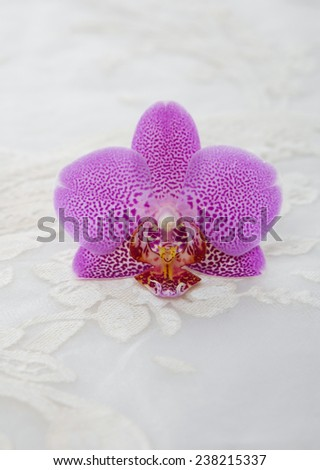 Set of orchid with lace texture  - stock photo