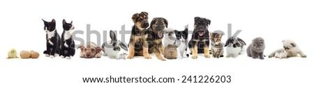 set of pets - stock photo