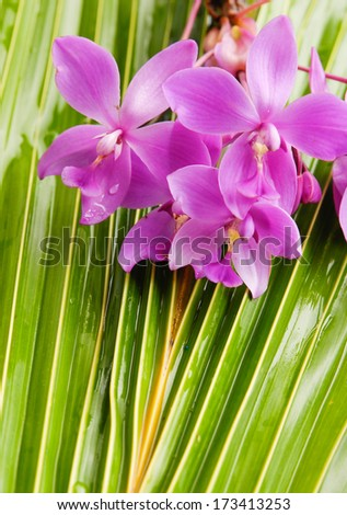 Set of Pink orchid and coconut leaf	 - stock photo