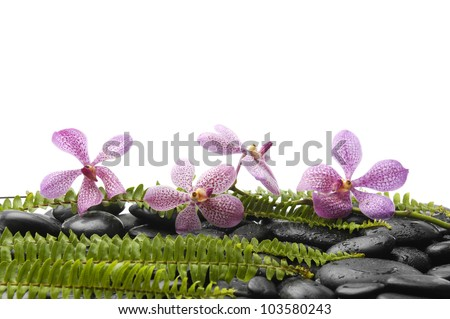 Set of pink orchid and stones with green fern on stones - stock photo