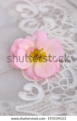 Set of pink rose on lace - stock photo