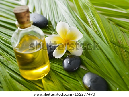 Set of plumeria and stones ,massage oil on wet palm leaf background  - stock photo