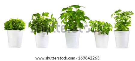 set of potted green plants isolated on white background - stock photo
