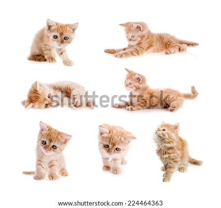 set of red cat isolated - stock photo