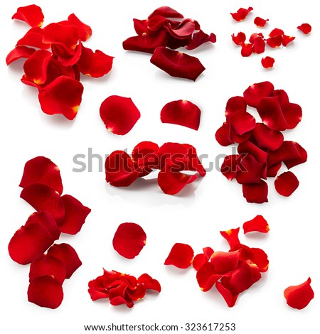 Set of red rose petals isolated on white background - stock photo