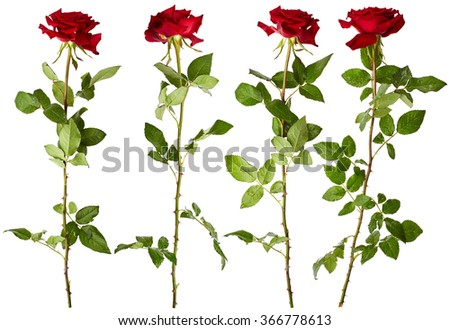 Set of red roses isolated on white background - stock photo