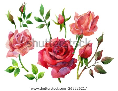 Set of red roses isolated on white background. Hand painted illustration - stock photo