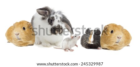 set of rodents on a white background isolated - stock photo