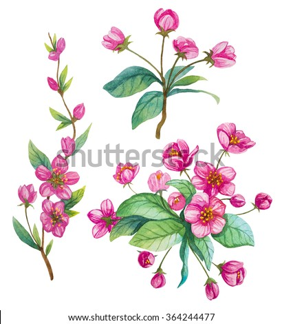 Set of sakura watercolor flowers. Spring. - stock photo